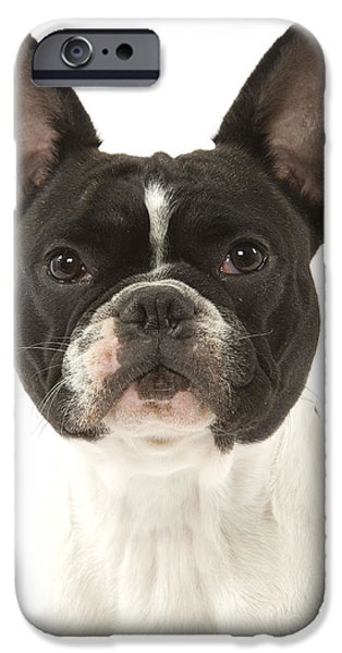 Dog Close-up iPhone Cases - French Bulldog iPhone Case by Jean-Michel Labat