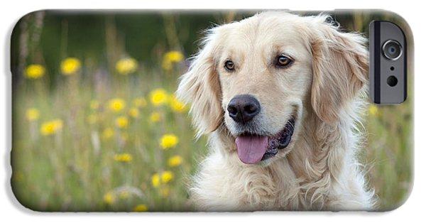 Dog Close-up iPhone Cases - Golden Retriever iPhone Case by John Daniels