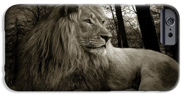 Lion Photographs iPhone Cases - Lion  iPhone Case by Christine Sponchia