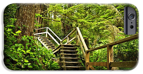 Stairs iPhone Cases - Path in temperate rainforest iPhone Case by Elena Elisseeva