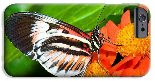 Piano iPhone Cases - Piano Key Butterfly iPhone Case by Millard H. Sharp