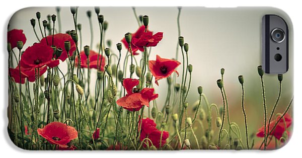 Blossom iPhone Cases - Poppy Meadow iPhone Case by Nailia Schwarz