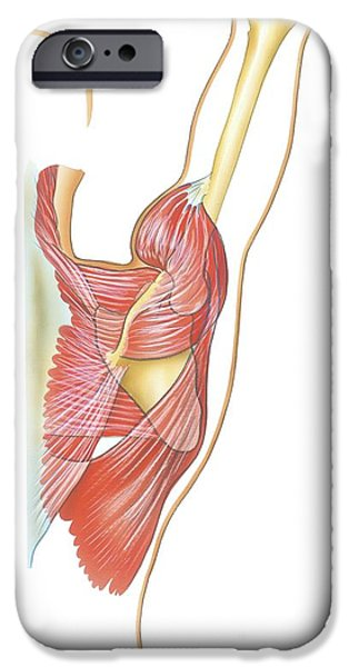 Retraction iPhone Cases - Shoulder Joint Movement, Artwork iPhone Case by Bo Veisland