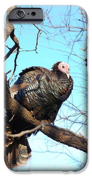 Eastern Wild Turkey iPhone Cases - Wild Turkey iPhone Case by Thea Wolff