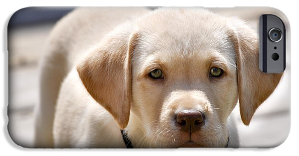 Fuzzy Golden Puppy iPhone Cases - A Golden Lab named Monty iPhone Case by Adam Van Spronsen