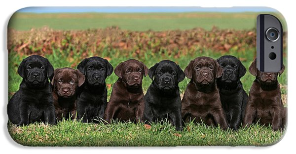 Dog Photos iPhone Cases - 8 Labrador Retriever puppies brown and black side by side iPhone Case by Dog Photos