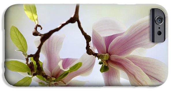 Flora iPhone Cases - Magnolia Flowers iPhone Case by Nailia Schwarz