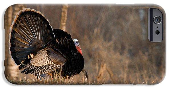 Eastern Wild Turkey iPhone Cases - Male Eastern Wild Turkey iPhone Case by Linda Freshwaters Arndt