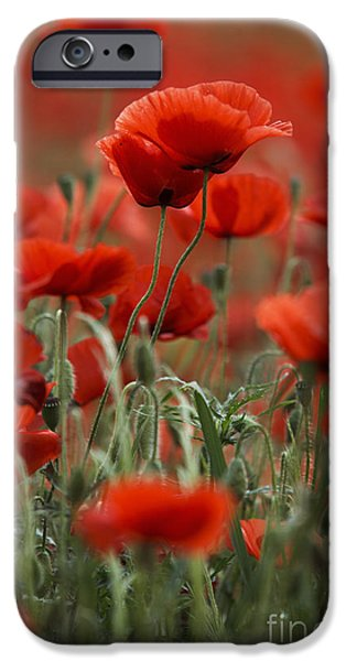 Petals iPhone Cases - Red iPhone Case by Nailia Schwarz