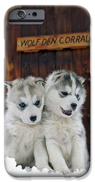Barns In Snow iPhone Cases - Siberian Husky Puppies iPhone Case by Rolf Kopfle