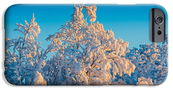 Wintertime iPhone Cases - Trees In The Frozen Landscape, Cold iPhone Case by Panoramic Images