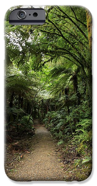 Forest iPhone Cases - Tropical forest iPhone Case by Les Cunliffe