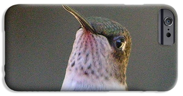 Nature Study iPhone Cases - #873 d494A Hummingbird  Get To The Point iPhone Case by Robin Lee Mccarthy Photography
