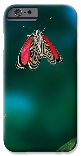 89 Butterfly in Flight iPhone Case by Stephen Dalton