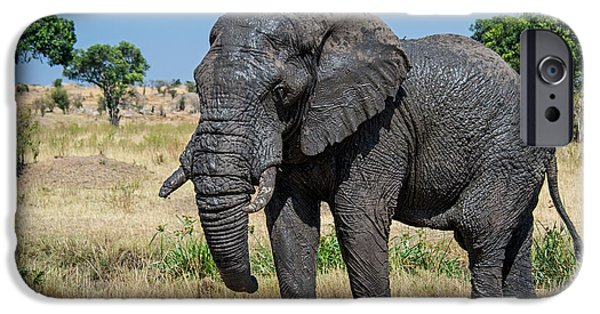Elephants iPhone Cases - African Elephant Loxodonta Africana iPhone Case by Panoramic Images