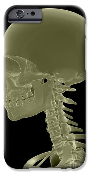 Frontal Bones iPhone Cases - Bones Of The Head And Neck iPhone Case by Science Picture Co