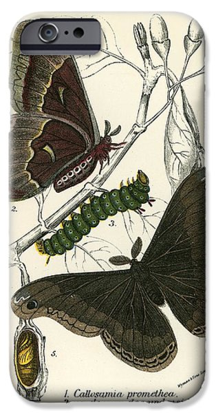 Insect iPhone Cases - Butterflies iPhone Case by English School