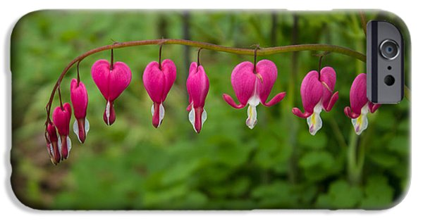 Bleeding Hearts iPhone Cases - Bleeding Hearts iPhone Case by Martin Newman
