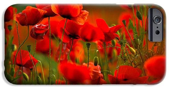 Petals iPhone Cases - Poppy Dream iPhone Case by Nailia Schwarz