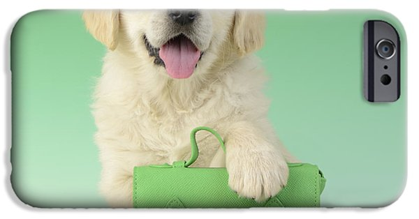 Satchell iPhone Cases - 9 To 5 Labrador iPhone Case by Greg Cuddiford