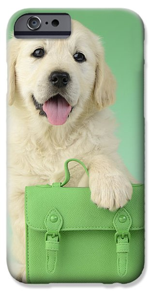 9 To 5 Labrador iPhone Case by Greg Cuddiford