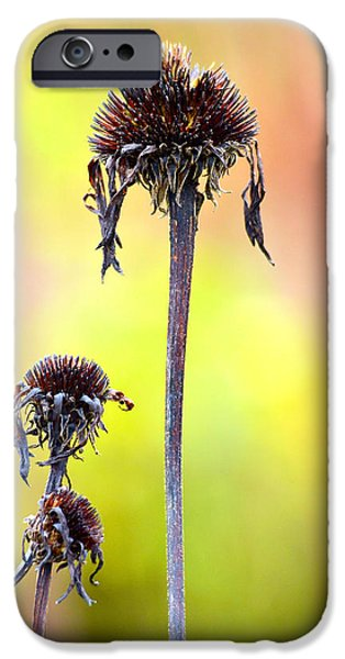 Wilted flower  iPhone Case by Toppart Sweden