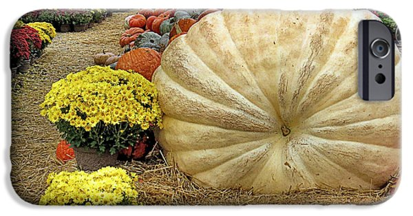Farmstand iPhone Cases - 917 Pound Pumpkin iPhone Case by Janice Drew