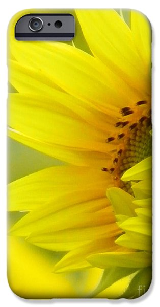 Farm Stand iPhone Cases - #923 D727 Awakening Sunflower on Colby Farm Newbury Massachusetts     New Beginnings iPhone Case by Robin Lee Mccarthy Photography