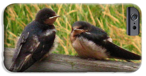 Best Sellers -  - Barn Swallow iPhone Cases - A Baby Barn Swallow Duo Waits Patiently for Lunch iPhone Case by J McCombie