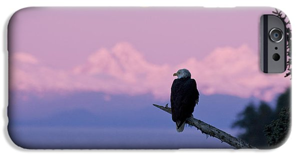 Moonscape iPhone Cases - A Bald Eagle Perched On A Branch With iPhone Case by John Hyde