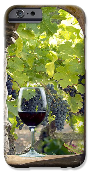 Cellar iPhone Cases - A Beautiful Day at the Vineyard iPhone Case by Jon Neidert