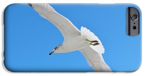 United iPhone Cases - A Beautiful Seagull iPhone Case by Cynthia Guinn