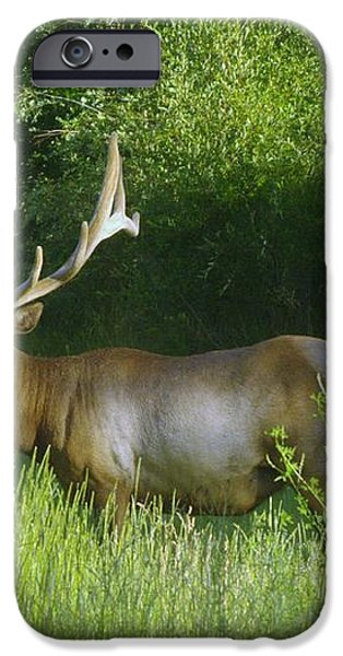 A BIG WIDE RACK  iPhone Case by Jeff  Swan