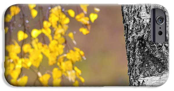 Park Scene iPhone Cases - A birch at the lake iPhone Case by Toppart Sweden