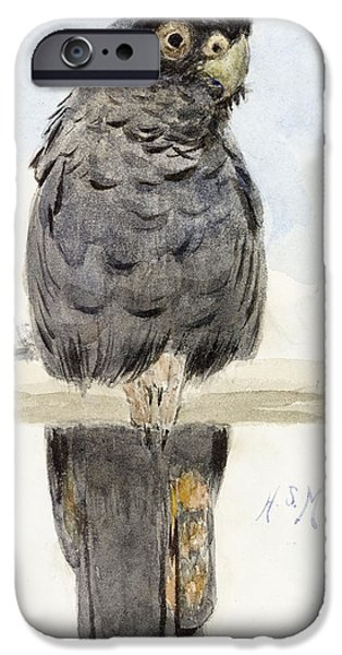 On Paper Paintings iPhone Cases - A Black Cockatoo iPhone Case by Henry Stacey Marks