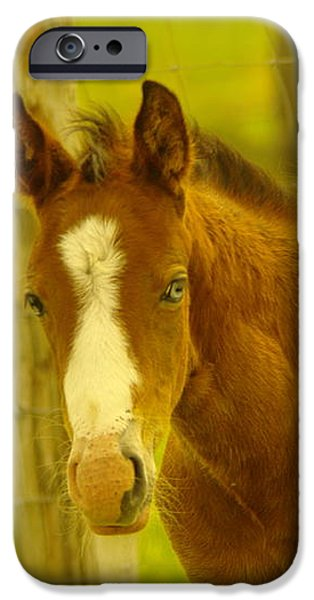 A BLUE EYED COLT iPhone Case by Jeff  Swan