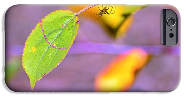 Beauty Mark iPhone Cases - A branch with leaves iPhone Case by Toppart Sweden