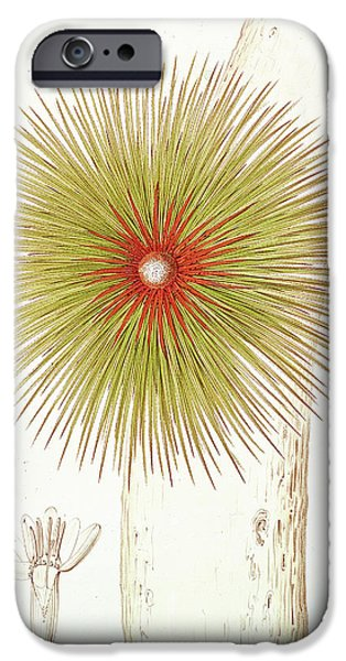 Bromeliad iPhone Cases - A Bromelia Found in the Andes iPhone Case by French School
