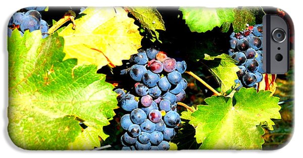 Windy Point Winery iPhone Cases - A Bunch of Grapes iPhone Case by Kay Gilley