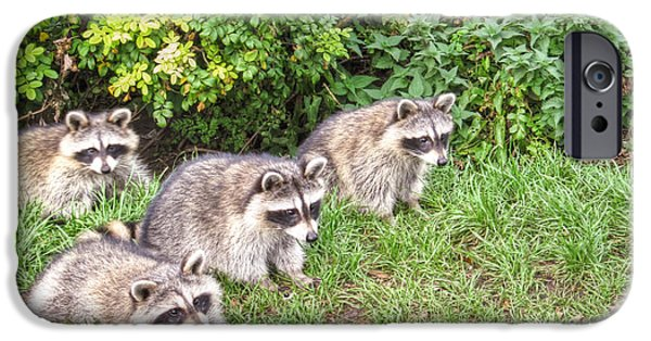 Raccoon Digital Art iPhone Cases - A bunch of naughty raccoons  iPhone Case by Eti Reid