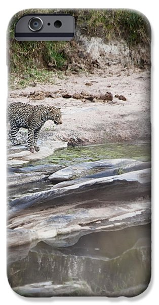 A Cheetah Stands At The Edge Of The iPhone Case by Diane Levit