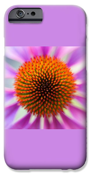 Echinacea iPhone Cases - A Circle in a Square iPhone Case by Caitlyn  Grasso