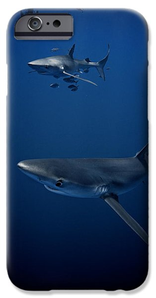 Shark Pyrography iPhone Cases - A Close Encounter iPhone Case by Simon Sundelin