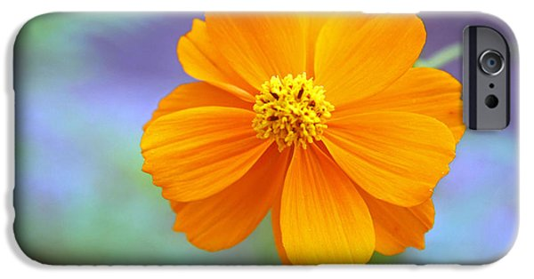 Cora Wandel iPhone Cases - A Colorful Flower iPhone Case by Cora Wandel