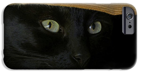 American Shorthair iPhone Cases - A Cool Cat iPhone Case by Ben K