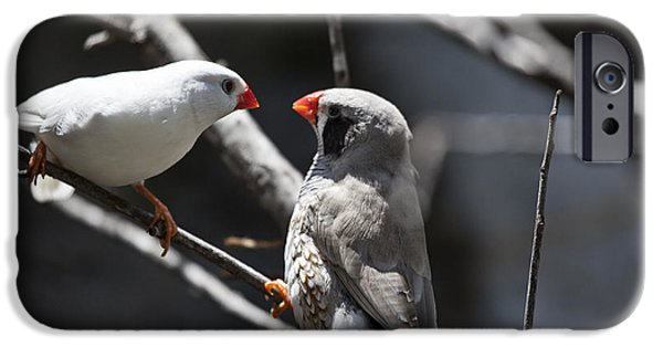 Finch iPhone Cases - A Couple iPhone Case by Douglas Barnard