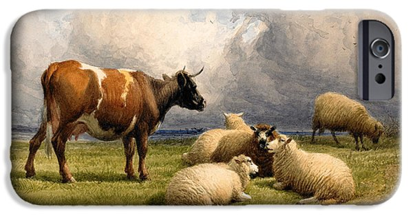 On Paper Paintings iPhone Cases - A Cow and Five Sheep iPhone Case by Thomas Sidney Cooper