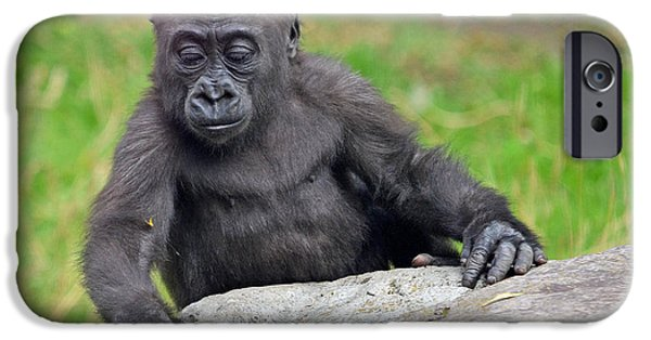 Bonding iPhone Cases - A Curious Baby Gorilla  iPhone Case by Jim Fitzpatrick