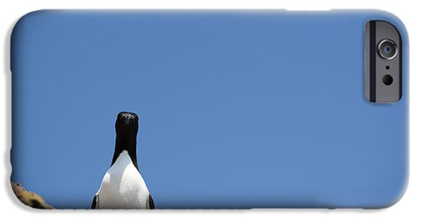 Razorbill iPhone Cases - A Curious Bird iPhone Case by Anne Gilbert