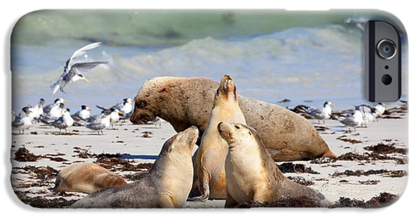 Sea Lions iPhone Cases - A Day at the Beach iPhone Case by Mike Dawson